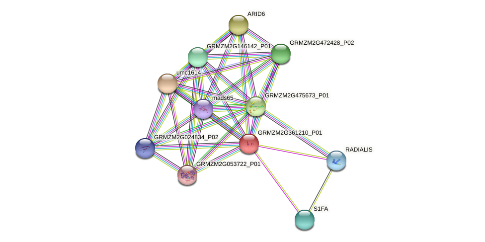 GRMZM2G361210_P01 protein (Zea mays) - STRING interaction network