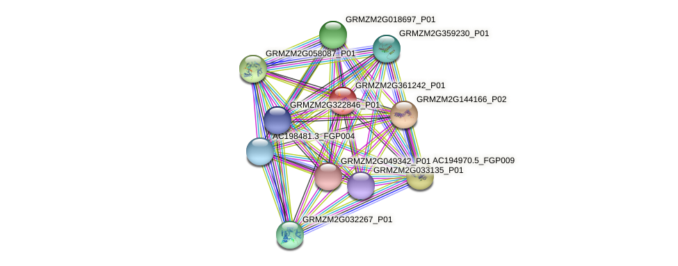 GRMZM2G361242_P01 protein (Zea mays) - STRING interaction network