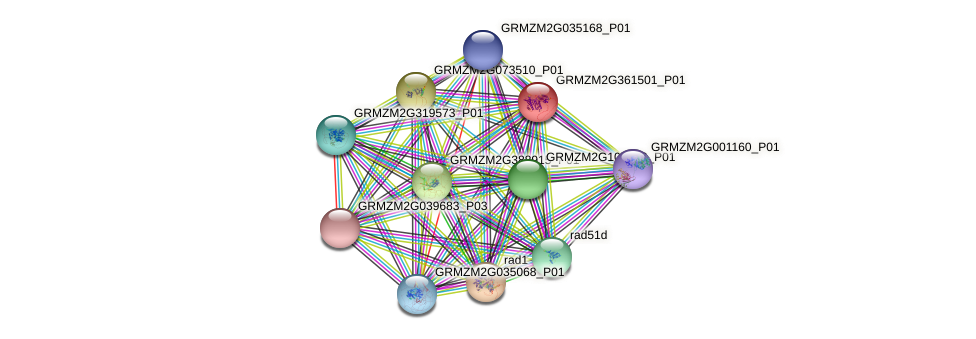 Zm.37432 protein (Zea mays) - STRING interaction network