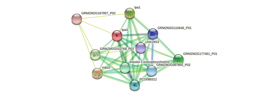 lpa3 protein (Zea mays) - STRING interaction network