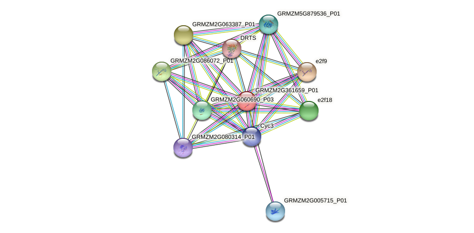 Zm.28508 protein (Zea mays) - STRING interaction network