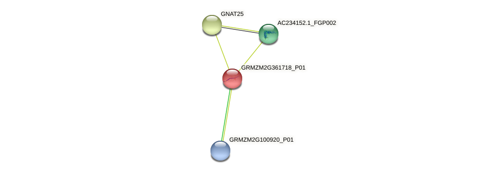 GRMZM2G361718_P01 protein (Zea mays) - STRING interaction network