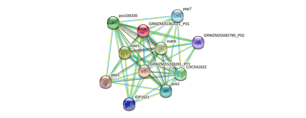GRMZM2G362021_P01 protein (Zea mays) - STRING interaction network