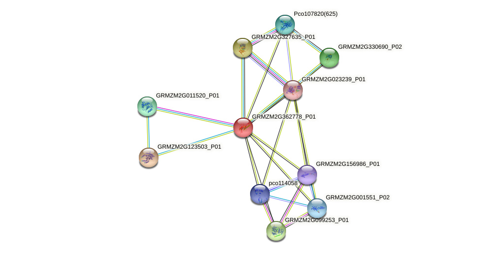 Zm.142495 protein (Zea mays) - STRING interaction network