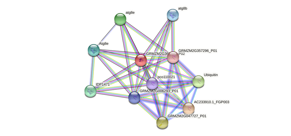 Zm.71263 protein (Zea mays) - STRING interaction network