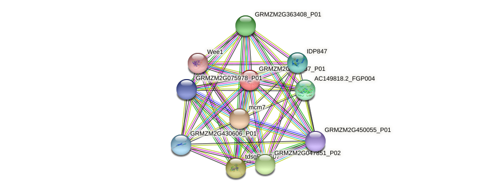 GRMZM2G363437_P01 protein (Zea mays) - STRING interaction network