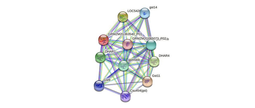 Zm.552 protein (Zea mays) - STRING interaction network