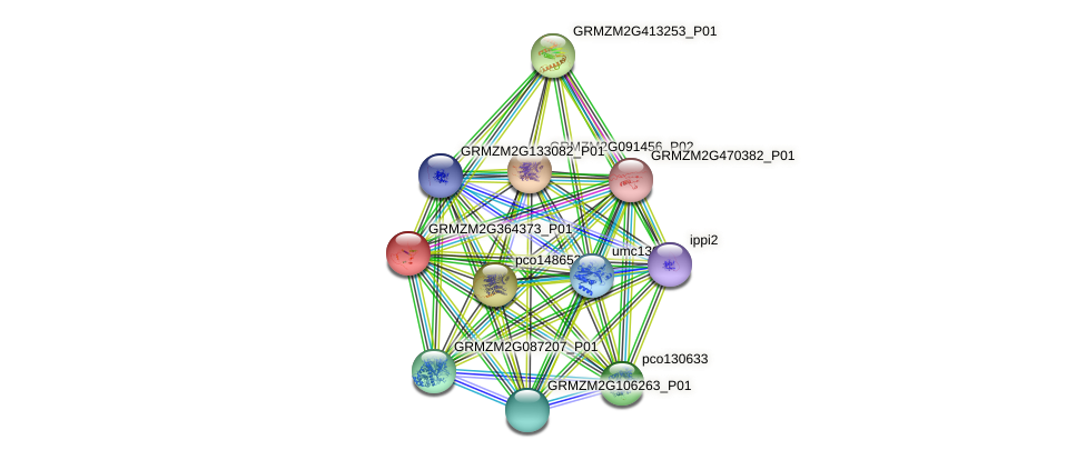 GRMZM2G364373_P01 protein (Zea mays) - STRING interaction network