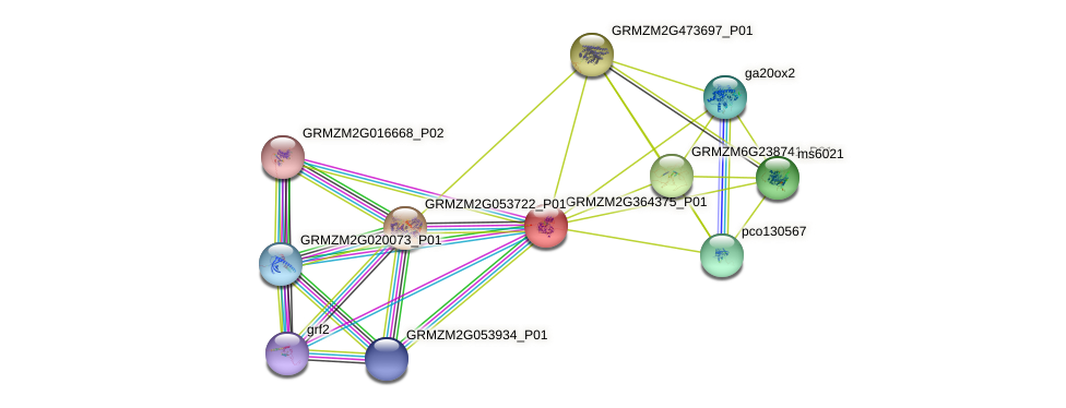 GRMZM2G364375_P01 protein (Zea mays) - STRING interaction network