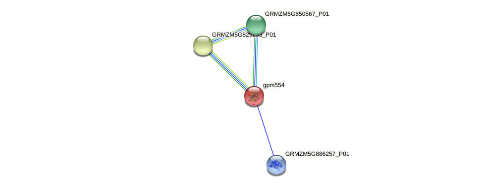 gpm554 protein (Zea mays) - STRING interaction network