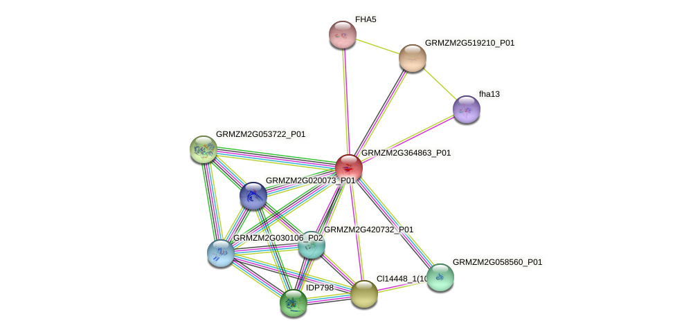 GRMZM2G364863_P01 protein (Zea mays) - STRING interaction network