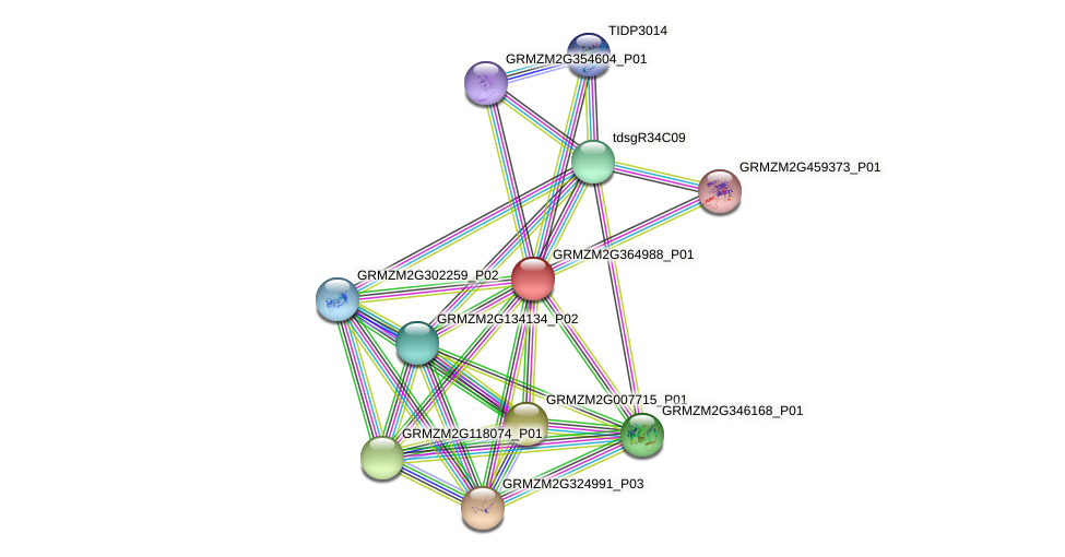 GRMZM2G364988_P01 protein (Zea mays) - STRING interaction network