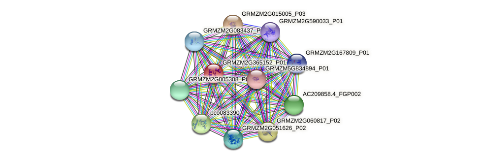 GRMZM2G365152_P01 protein (Zea mays) - STRING interaction network