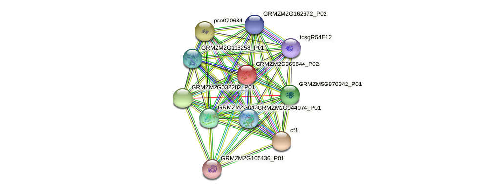 GRMZM2G365644_P02 protein (Zea mays) - STRING interaction network