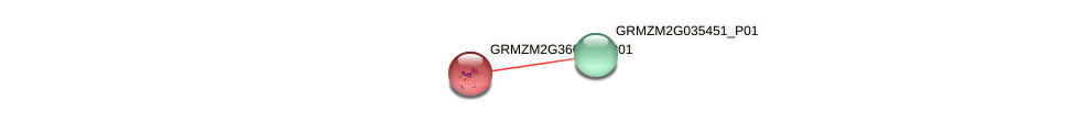 GRMZM2G366020_P01 protein (Zea mays) - STRING interaction network