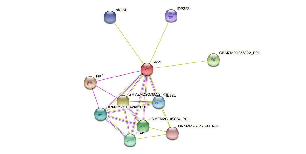 hb59 protein (Zea mays) - STRING interaction network