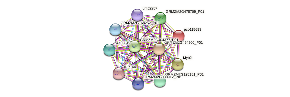pco115693 protein (Zea mays) - STRING interaction network