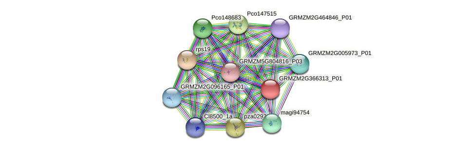 Zm.141505 protein (Zea mays) - STRING interaction network