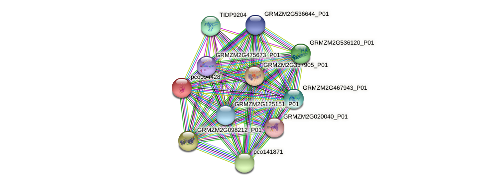 pco094428 protein (Zea mays) - STRING interaction network