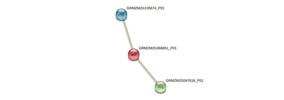 GRMZM2G366851_P01 protein (Zea mays) - STRING interaction network