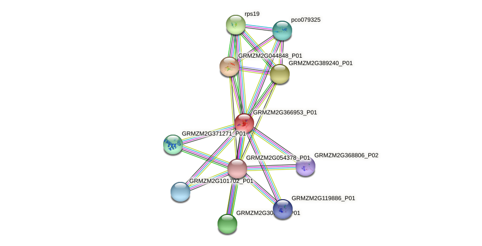 GRMZM2G366953_P01 protein (Zea mays) - STRING interaction network
