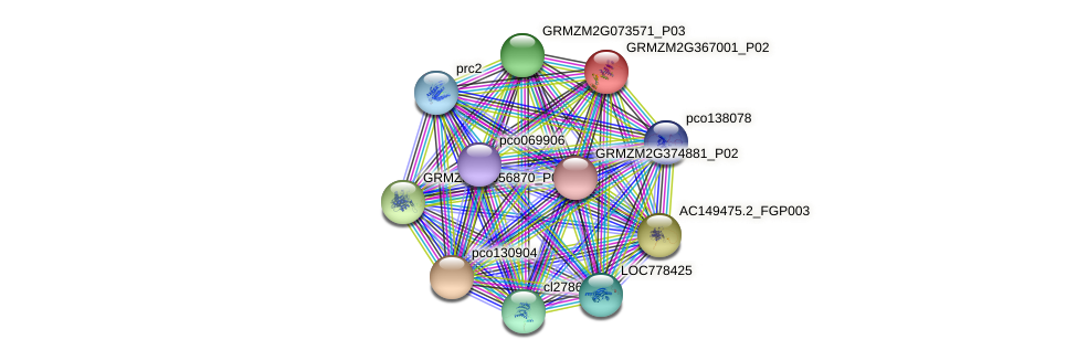 GRMZM2G367001_P02 protein (Zea mays) - STRING interaction network