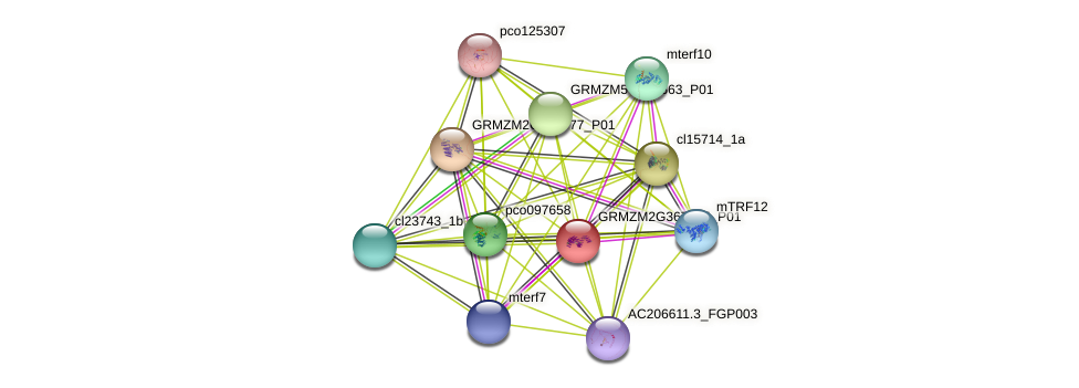 GRMZM2G367355_P01 protein (Zea mays) - STRING interaction network