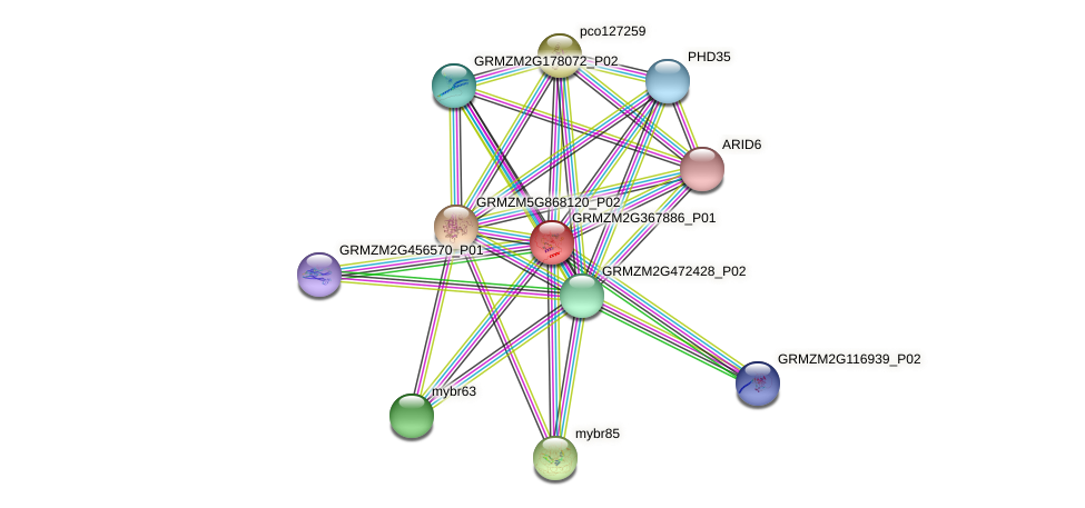 GRMZM2G367886_P01 protein (Zea mays) - STRING interaction network