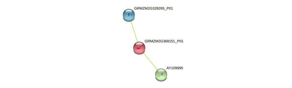 GRMZM2G368151_P01 protein (Zea mays) - STRING interaction network