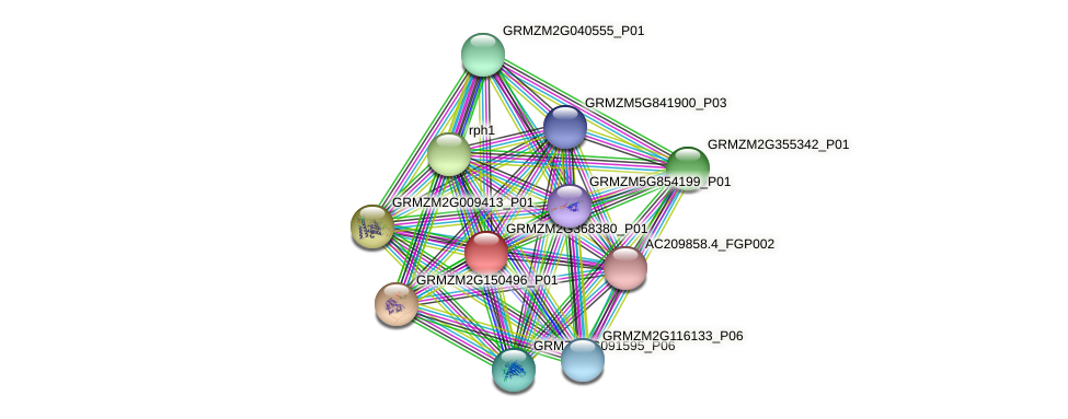 GRMZM2G368380_P01 protein (Zea mays) - STRING interaction network