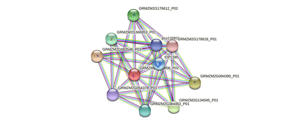 GRMZM2G368806_P02 protein (Zea mays) - STRING interaction network