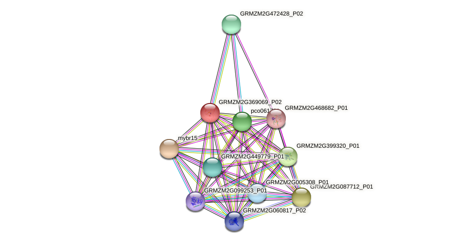 GRMZM2G369069_P02 protein (Zea mays) - STRING interaction network