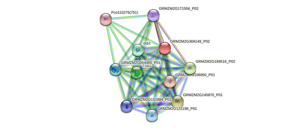 GRMZM2G369149_P02 protein (Zea mays) - STRING interaction network