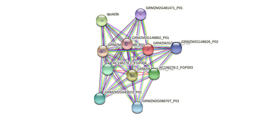 GRMZM2G369260_P01 protein (Zea mays) - STRING interaction network