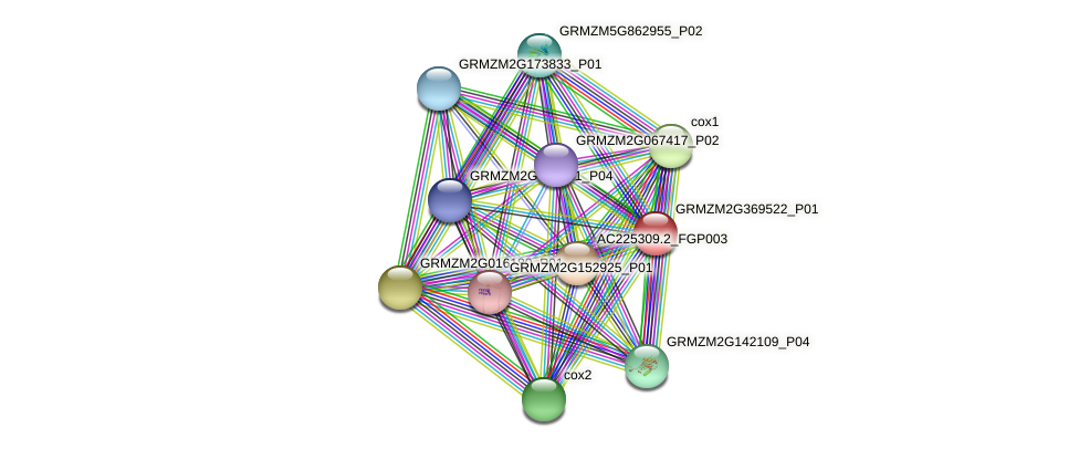 GRMZM2G369522_P01 protein (Zea mays) - STRING interaction network