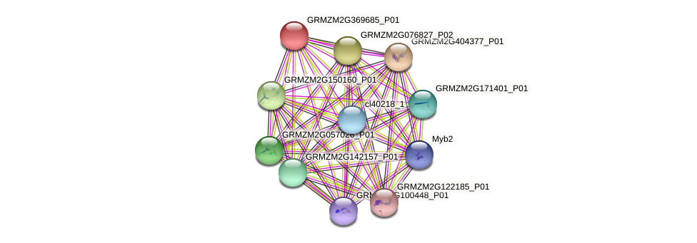 GRMZM2G369685_P01 protein (Zea mays) - STRING interaction network