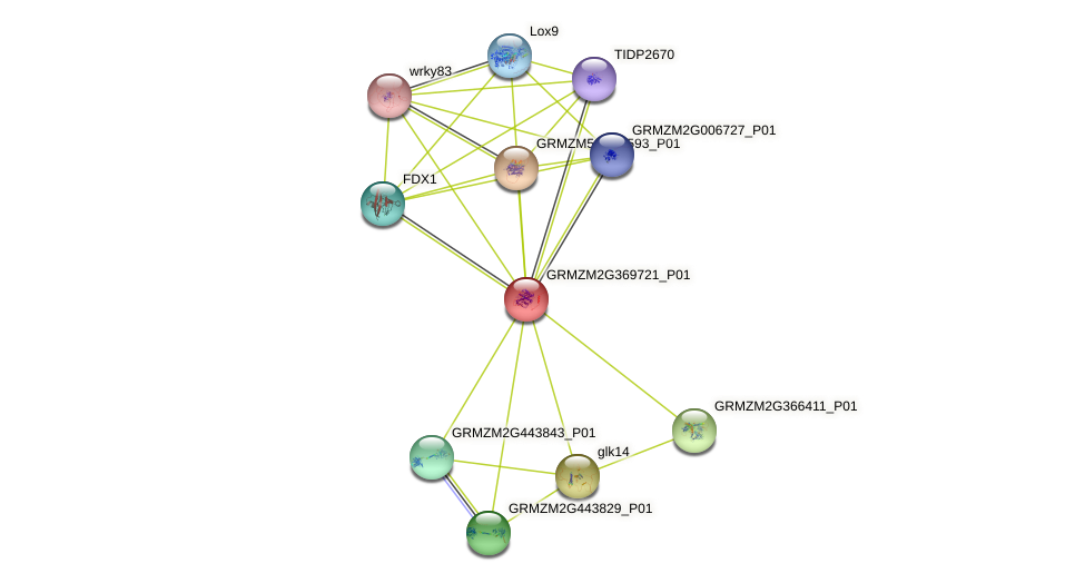 GRMZM2G369721_P01 protein (Zea mays) - STRING interaction network
