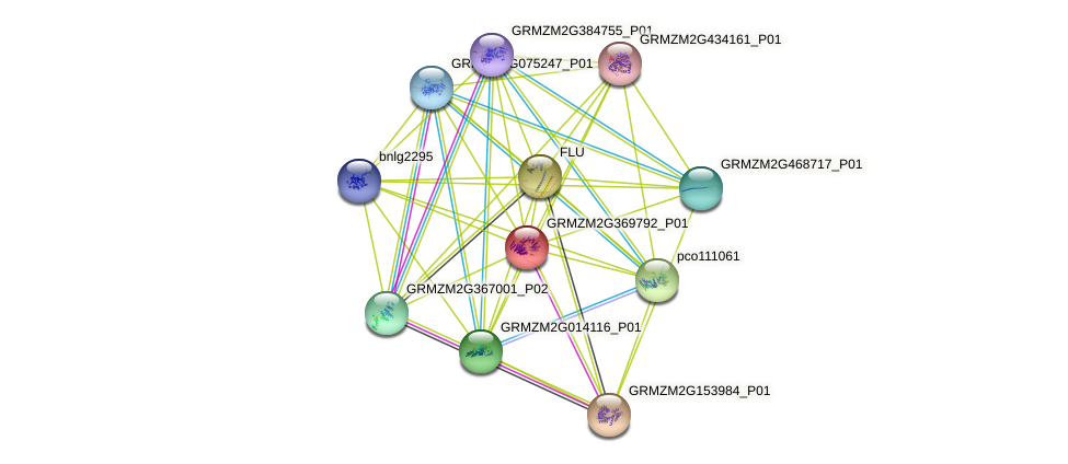 GRMZM2G369792_P01 protein (Zea mays) - STRING interaction network
