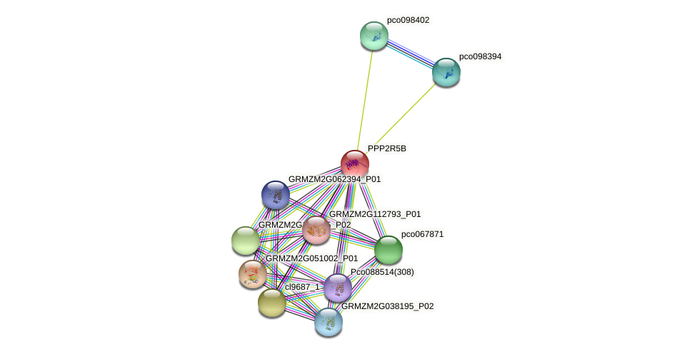 PPP2R5B protein (Zea mays) - STRING interaction network