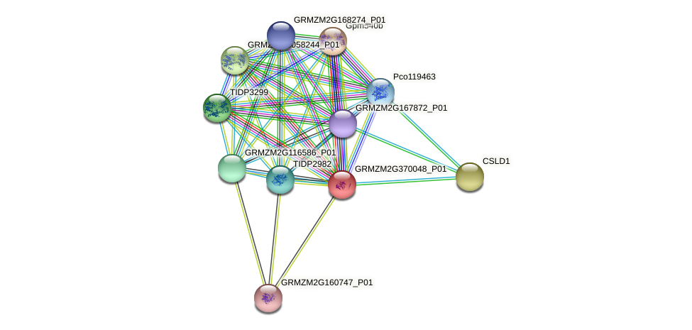 GRMZM2G370048_P01 protein (Zea mays) - STRING interaction network