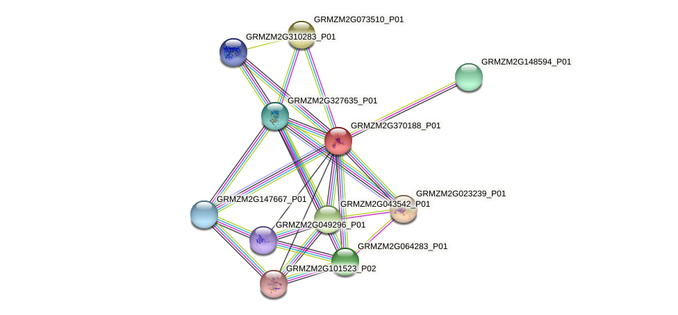 GRMZM2G370188_P01 protein (Zea mays) - STRING interaction network