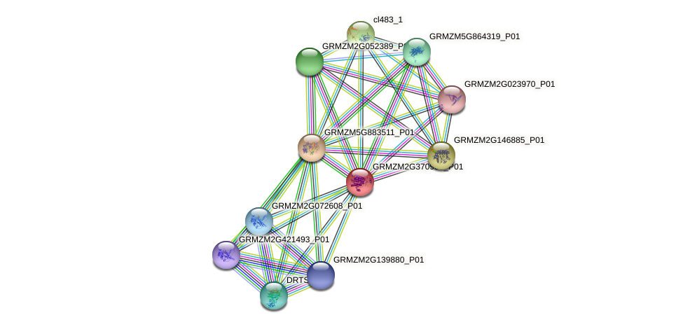 GRMZM2G370988_P01 protein (Zea mays) - STRING interaction network