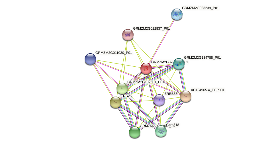 Zm.12992 protein (Zea mays) - STRING interaction network