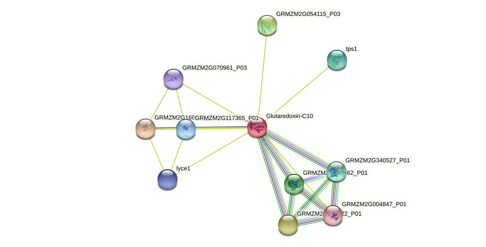 GRMZM2G371063_P01 protein (Zea mays) - STRING interaction network