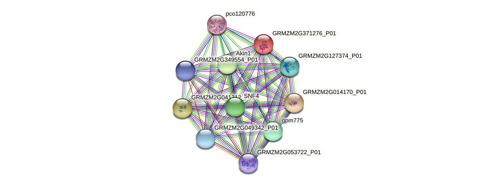 GRMZM2G371276_P01 protein (Zea mays) - STRING interaction network
