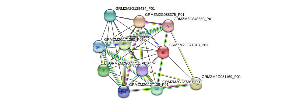 cl18267_1 protein (Zea mays) - STRING interaction network