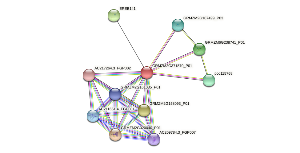 GRMZM2G371870_P01 protein (Zea mays) - STRING interaction network