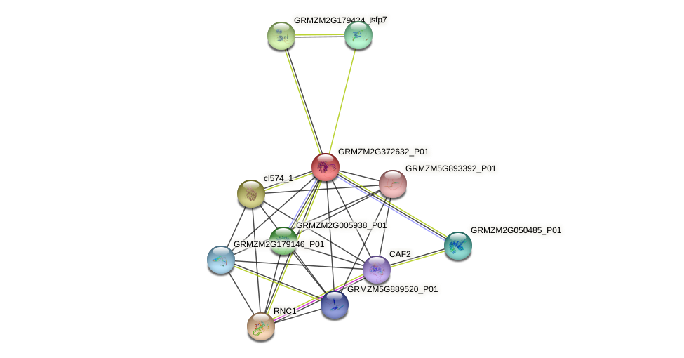GRMZM2G372632_P01 protein (Zea mays) - STRING interaction network