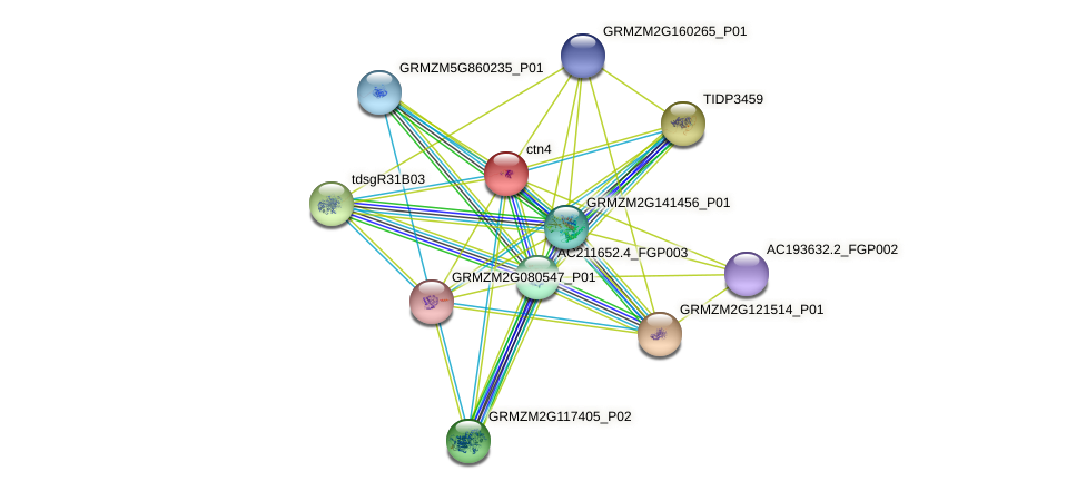 GRMZM2G373106_P01 protein (Zea mays) - STRING interaction network