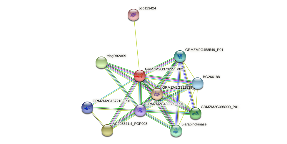 GRMZM2G373227_P02 protein (Zea mays) - STRING interaction network
